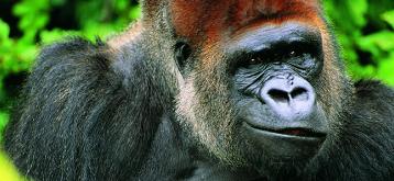 听力损伤无法修复,哺乳动物:这事怪我咯?