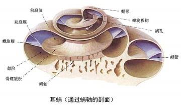 北京朝阳医院开展免费人工耳蜗植入,速来联系!